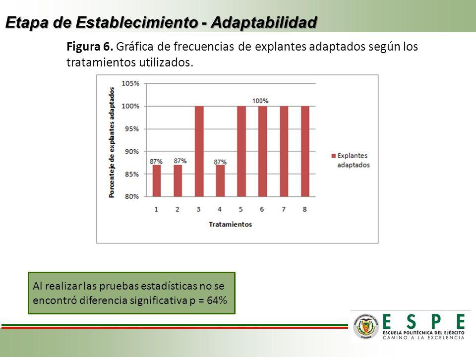 Etapa de Establecimiento - Adaptabilidad Figura 6. Gráfica de frecuencias de explantes adaptados según los tratamientos utilizados. Al realizar las pr