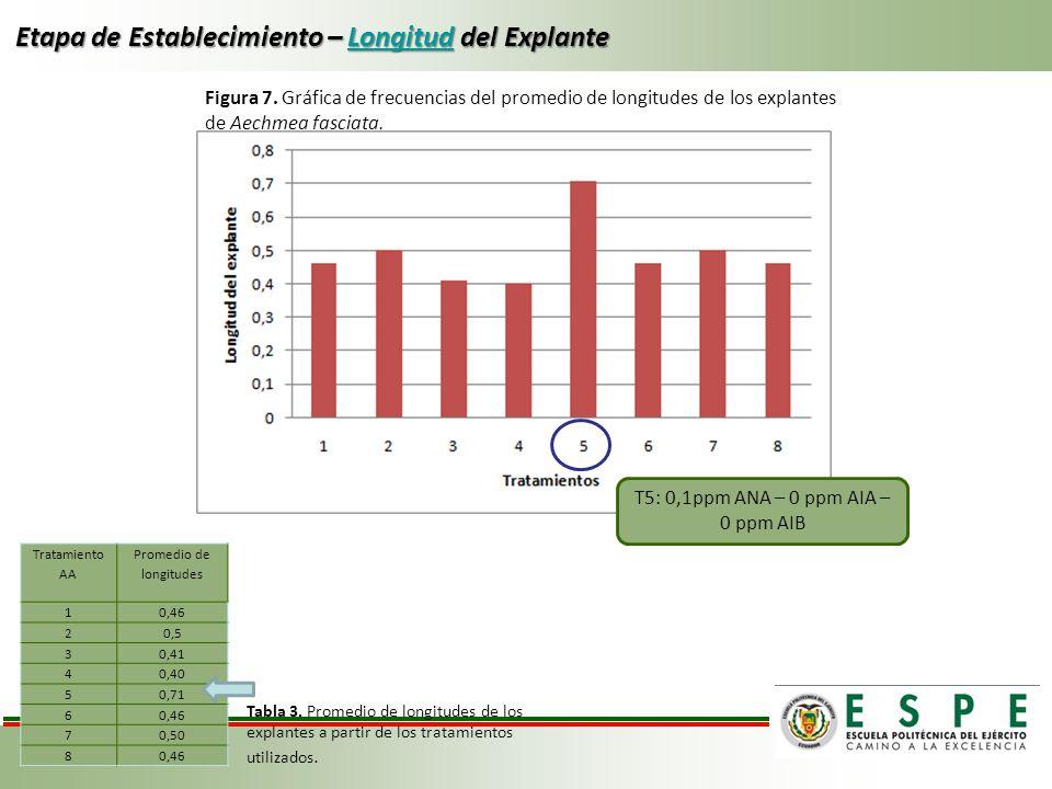 Etapa de Establecimiento – Longitud del Explante Longitud Tratamiento AA Promedio de longitudes 10,46 20,5 30,41 40,40 50,71 60,46 70,50 80,46 Tabla 3