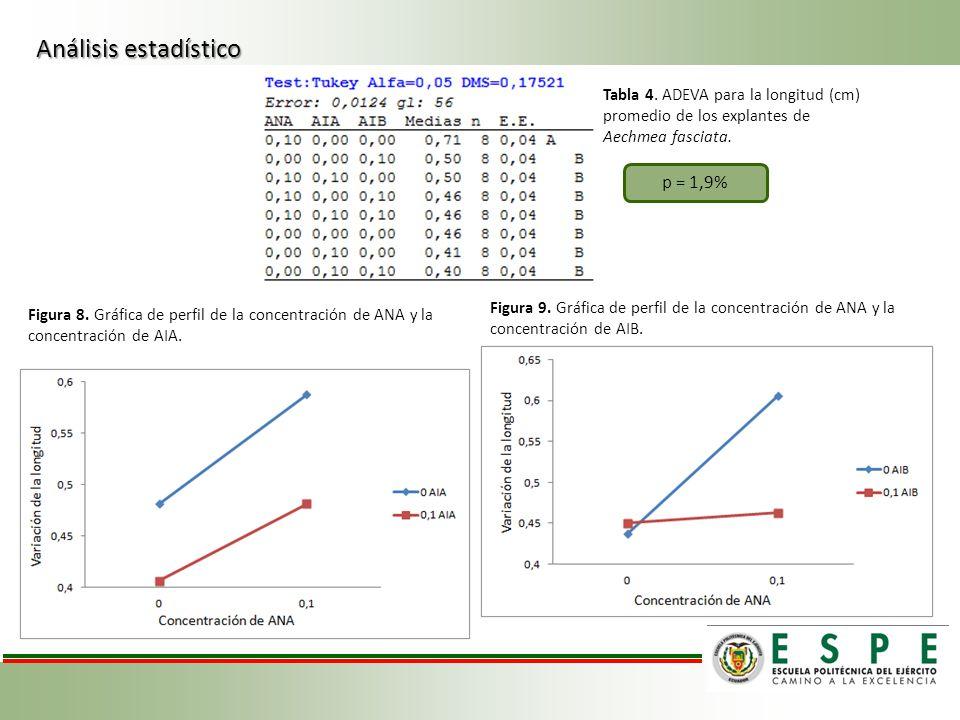 Tabla 4. ADEVA para la longitud (cm) promedio de los explantes de Aechmea fasciata. Figura 8. Gráfica de perfil de la concentración de ANA y la concen