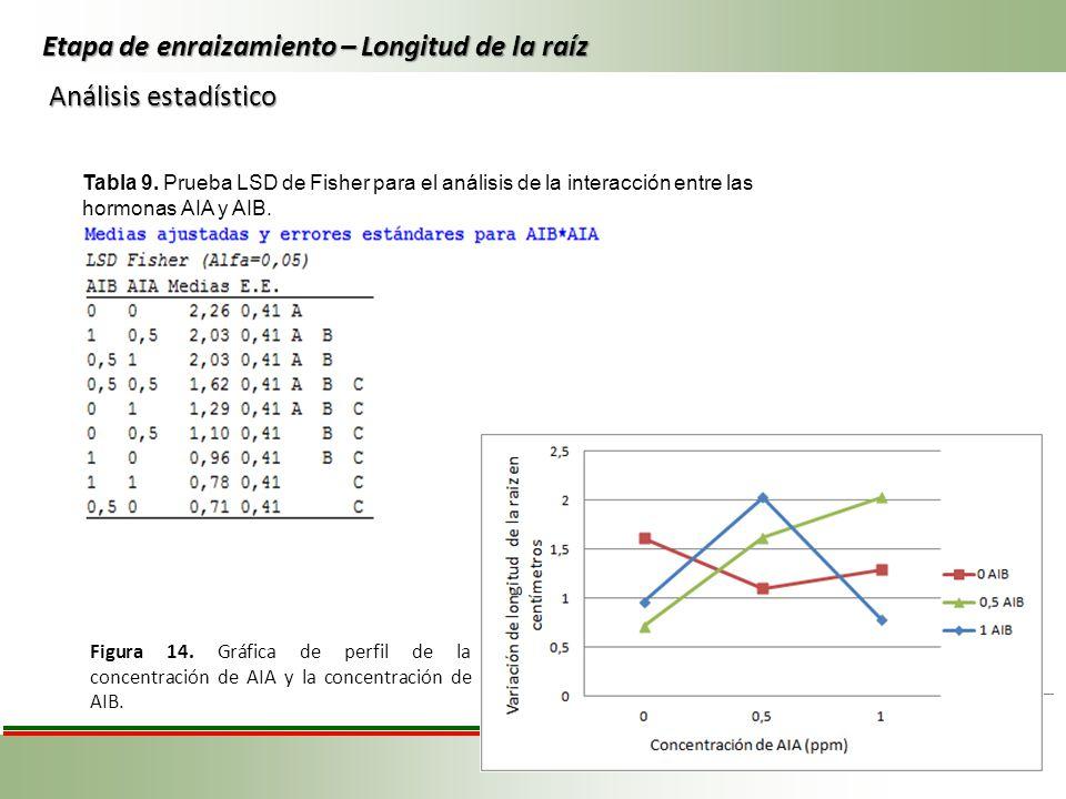 Tabla 9. Prueba LSD de Fisher para el análisis de la interacción entre las hormonas AIA y AIB. Etapa de enraizamiento – Longitud de la raíz Figura 14.