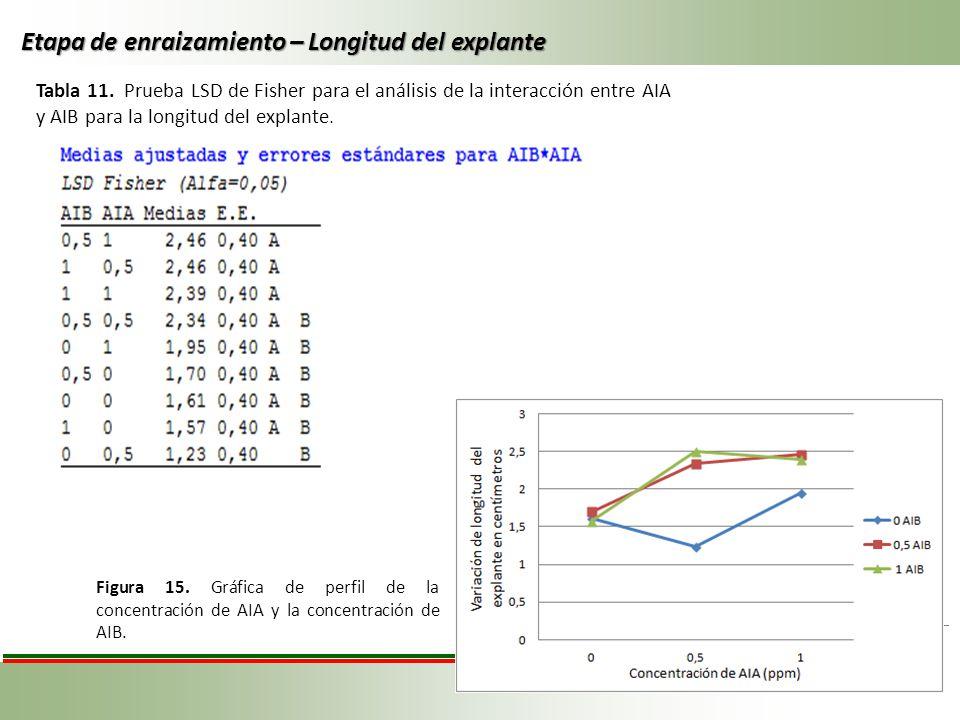 Tabla 11. Prueba LSD de Fisher para el análisis de la interacción entre AIA y AIB para la longitud del explante. Etapa de enraizamiento – Longitud del