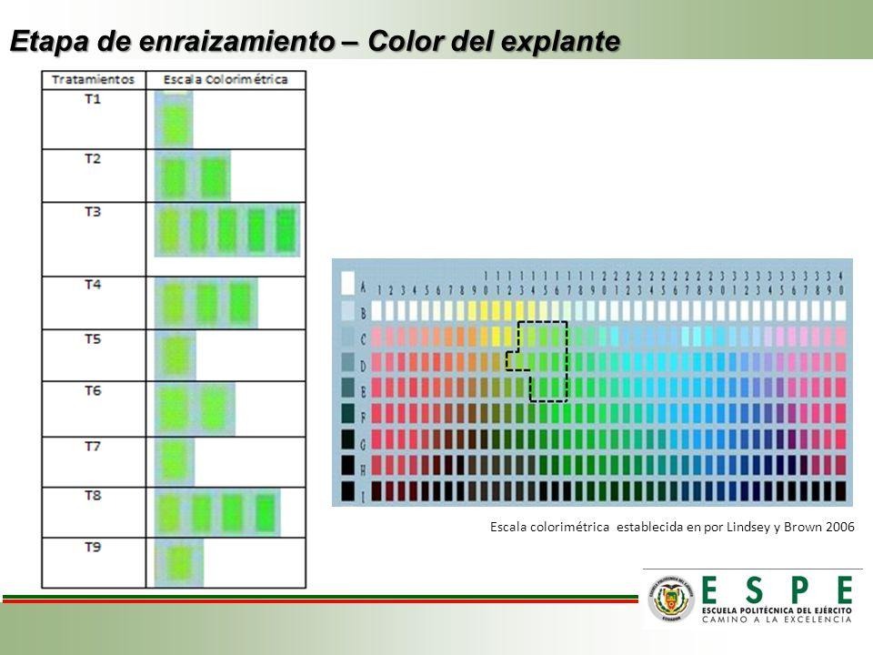Etapa de enraizamiento – Color del explante Escala colorimétrica establecida en por Lindsey y Brown 2006