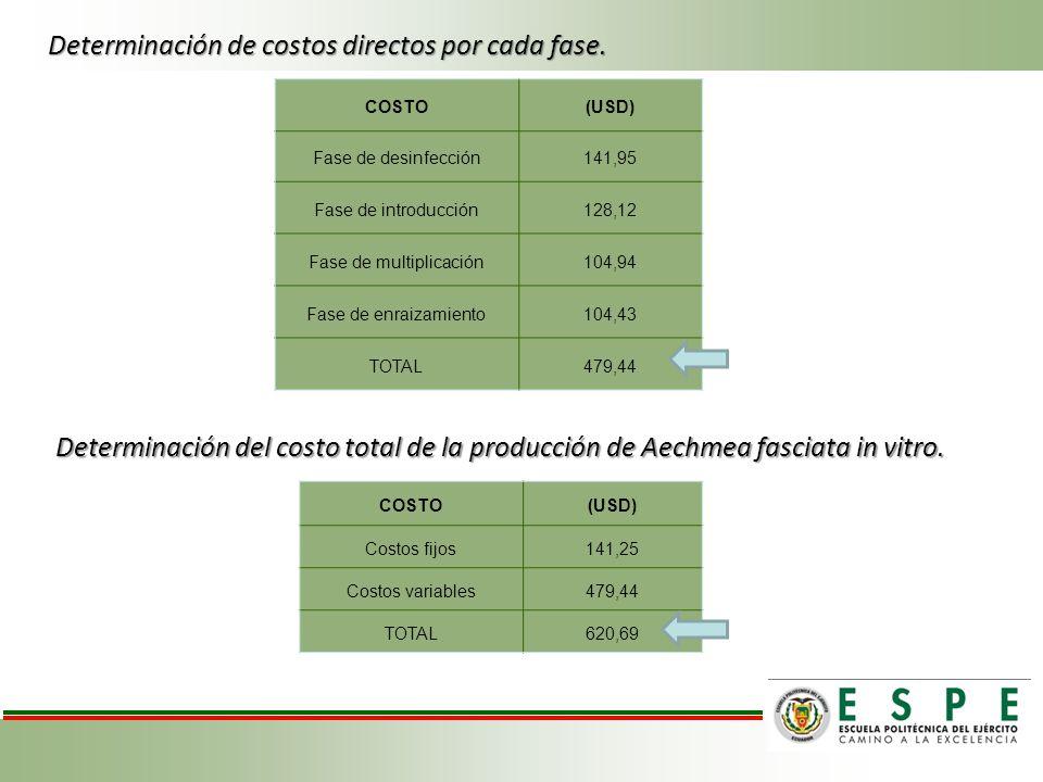 COSTO(USD) Fase de desinfección141,95 Fase de introducción128,12 Fase de multiplicación104,94 Fase de enraizamiento104,43 TOTAL479,44 COSTO(USD) Costo