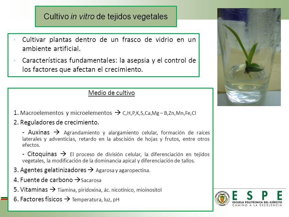 Cultivo in vitro de tejidos vegetales Cultivar plantas dentro de un frasco de vidrio en un ambiente artificial. Características fundamentales: la asep