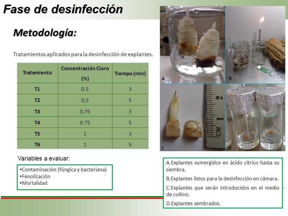 Fase de desinfección Tratamiento Concentración Cloro (%) Tiempo (min) T10.53 T20,55 T30,753 T40.755 T513 T615 Variables a evaluar: Contaminación (fúng