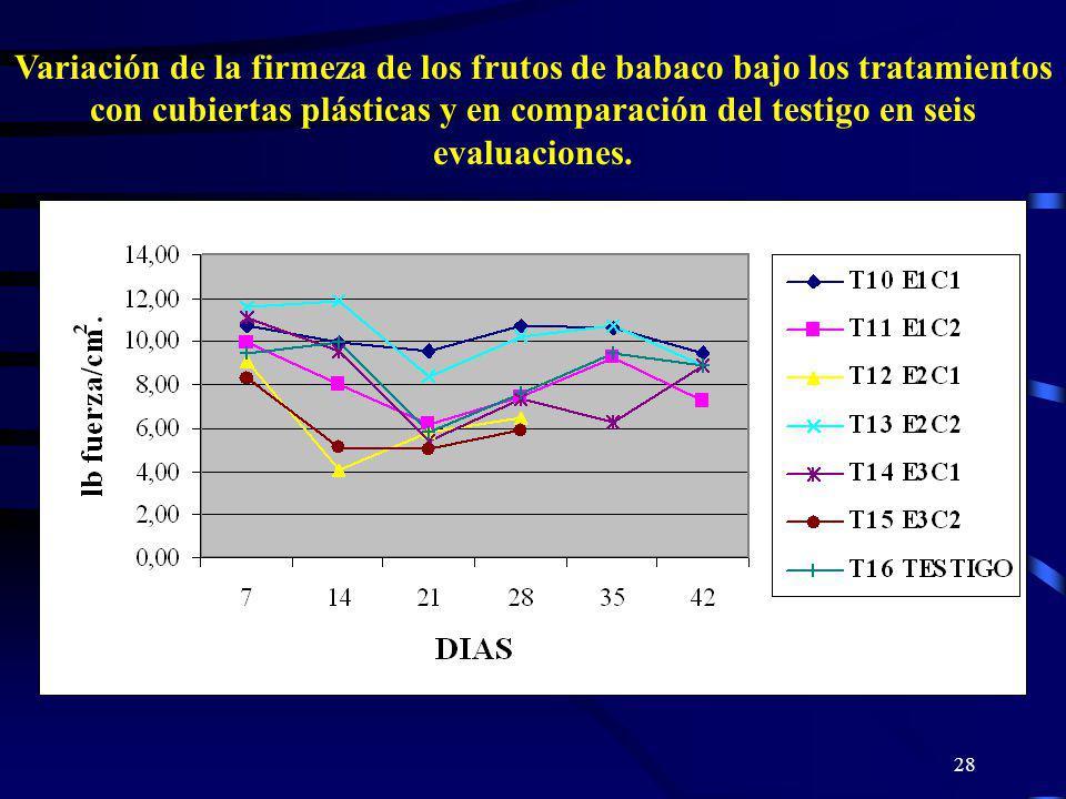 28 Variación de la firmeza de los frutos de babaco bajo los tratamientos con cubiertas plásticas y en comparación del testigo en seis evaluaciones.