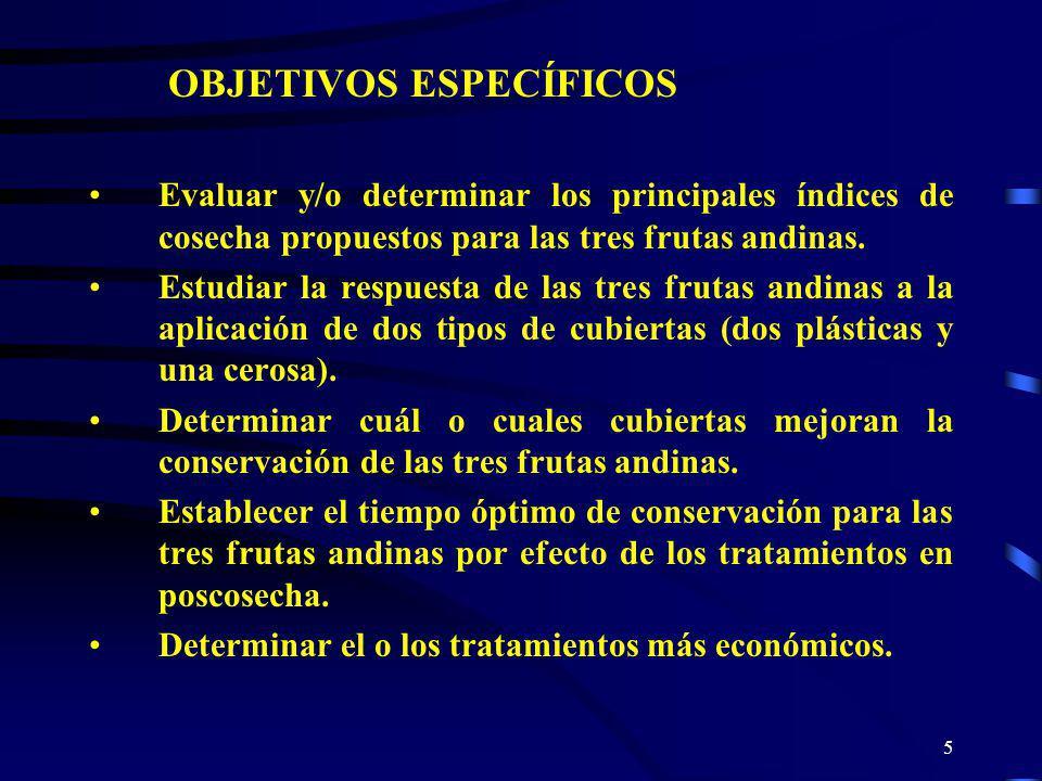 5 OBJETIVOS ESPECÍFICOS Evaluar y/o determinar los principales índices de cosecha propuestos para las tres frutas andinas. Estudiar la respuesta de la