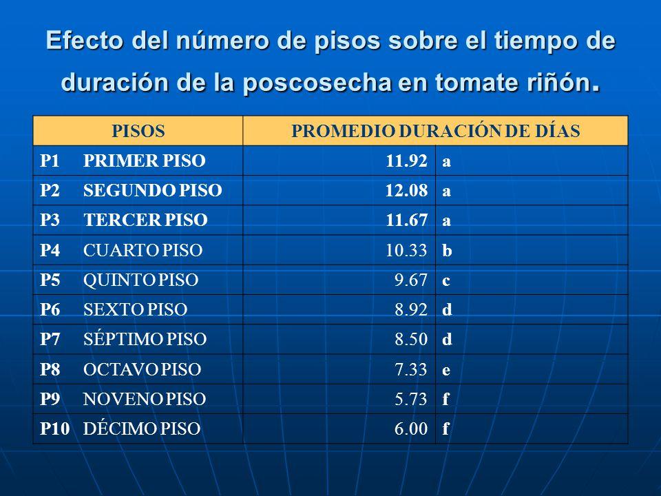 Efecto del número de pisos sobre el tiempo de duración de la poscosecha en tomate riñón. PISOSPROMEDIO DURACIÓN DE DÍAS P1 PRIMER PISO11.92a P2 SEGUND