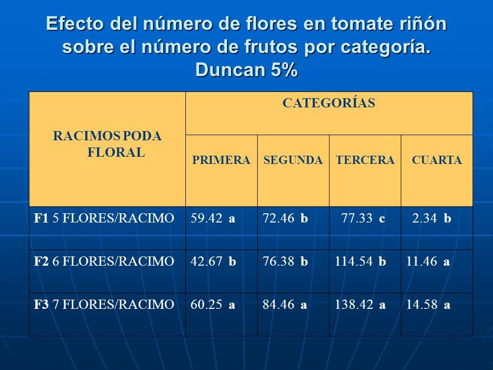 Efecto del número de flores en tomate riñón sobre el número de frutos por categoría. Duncan 5% RACIMOS PODA FLORAL CATEGORÍAS PRIMERASEGUNDATERCERACUA