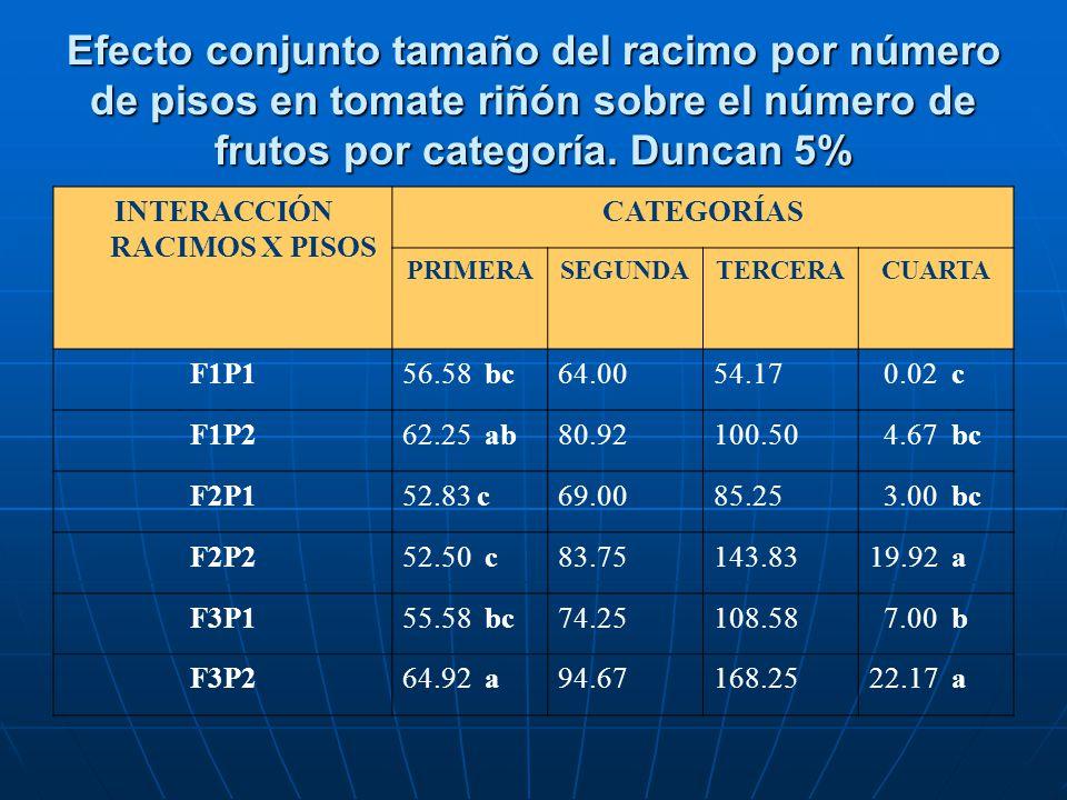Efecto conjunto tamaño del racimo por número de pisos en tomate riñón sobre el número de frutos por categoría. Duncan 5% INTERACCIÓN RACIMOS X PISOS C