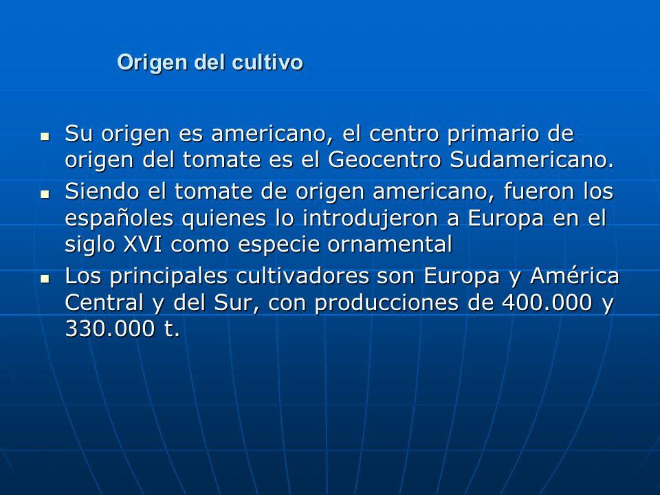 Origen del cultivo Su origen es americano, el centro primario de origen del tomate es el Geocentro Sudamericano. Su origen es americano, el centro pri