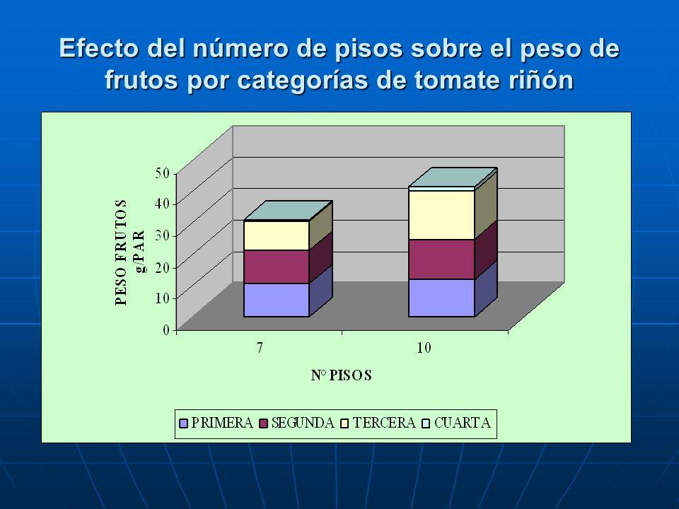 Efecto del número de pisos sobre el peso de frutos por categorías de tomate riñón