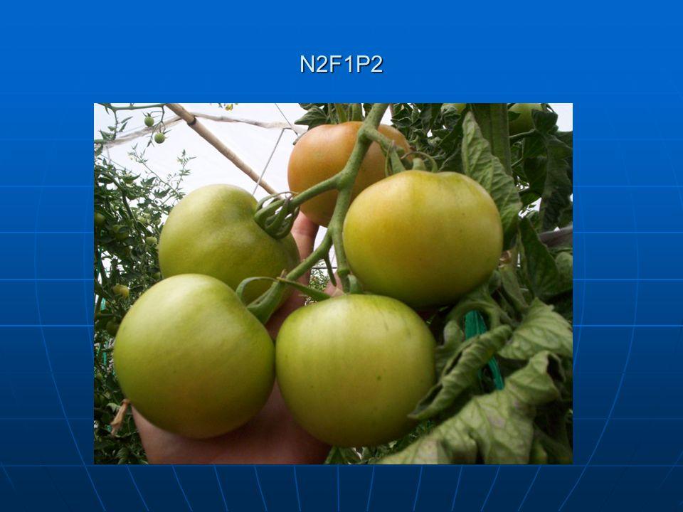 N2F1P2