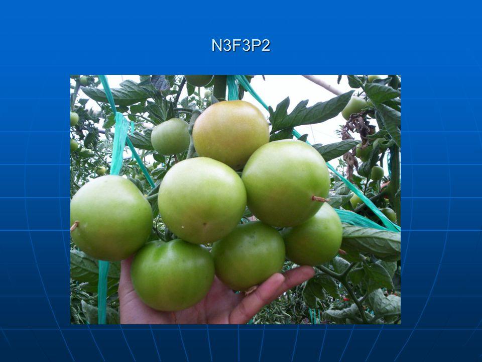 N3F3P2