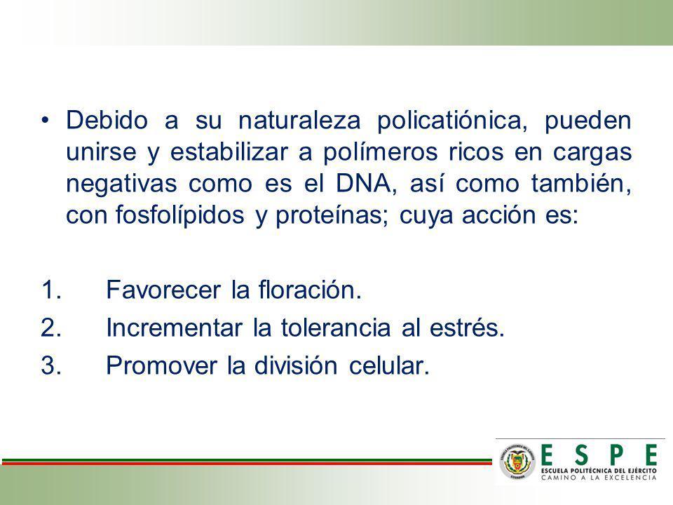 REINO: Protista DIVISIÓN: Phaeophyta CLASE: Phaeophyceae ORDEN: Fucales FAMILIA: Fucaceae GÉNERO: Ascophyllum ESPECIE: A.
