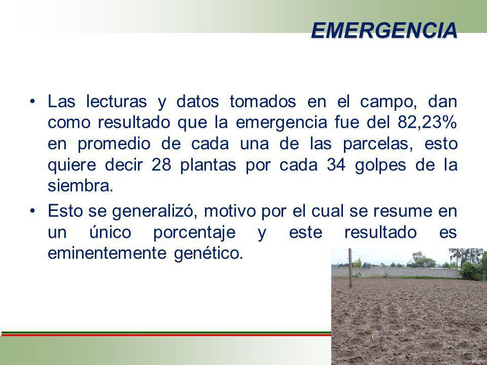 EMERGENCIA Las lecturas y datos tomados en el campo, dan como resultado que la emergencia fue del 82,23% en promedio de cada una de las parcelas, esto