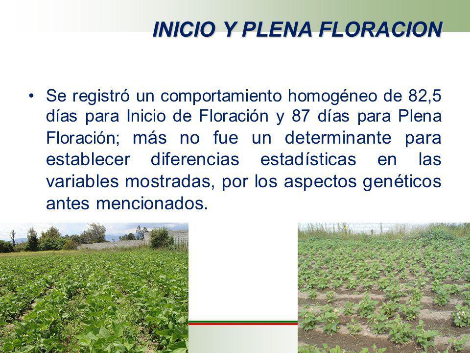 INICIO Y PLENA FLORACION Se registró un comportamiento homogéneo de 82,5 días para Inicio de Floración y 87 días para Plena Floración; más no fue un d
