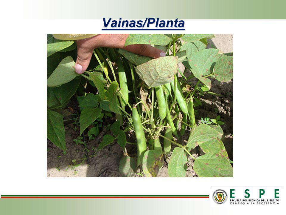 Análisis de variancia para vainas/planta de frejol variedad cargabello, El Quinche, Quito, Pichincha 2011.