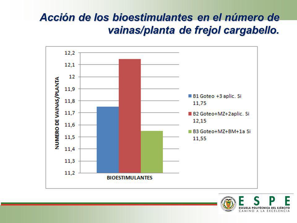 Efecto de los tratamientos sobre vainas por planta de frejol variedad cargabello.