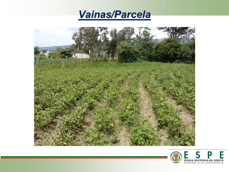 Análisis de variancia para vainas/parcela en el cultivo de frejol variedad cargabello.