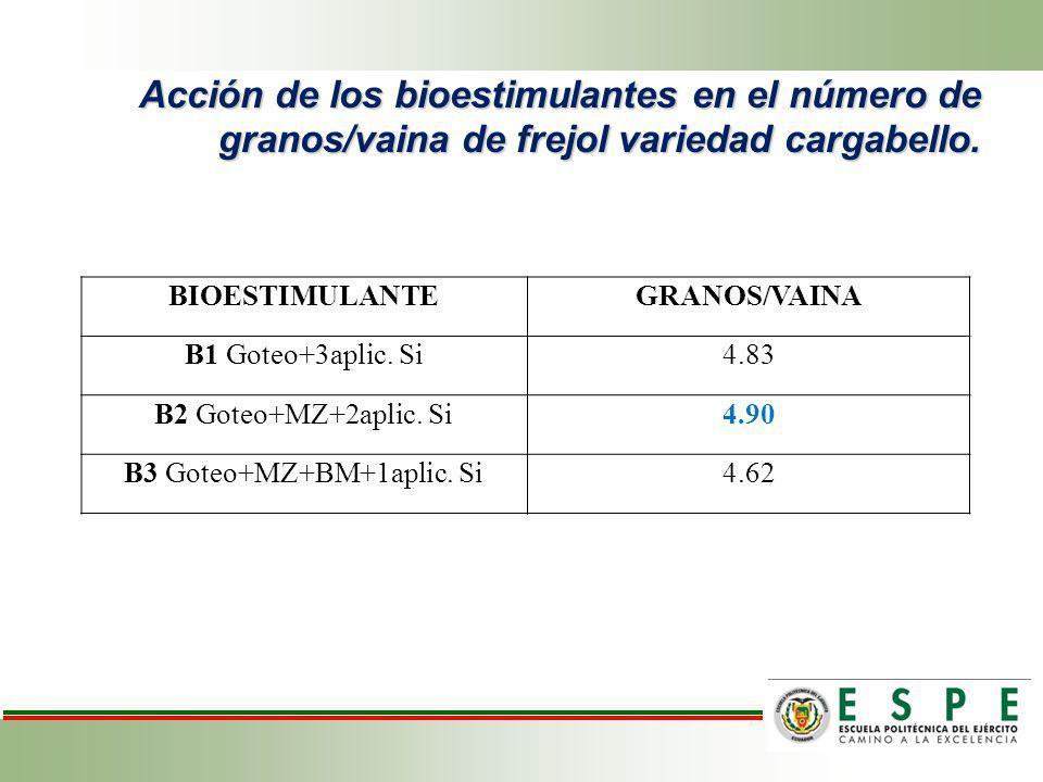Acción de los bioestimulantes en el número de granos/vaina de frejol variedad cargabello. BIOESTIMULANTEGRANOS/VAINA B1 Goteo+3aplic. Si4.83 B2 Goteo+