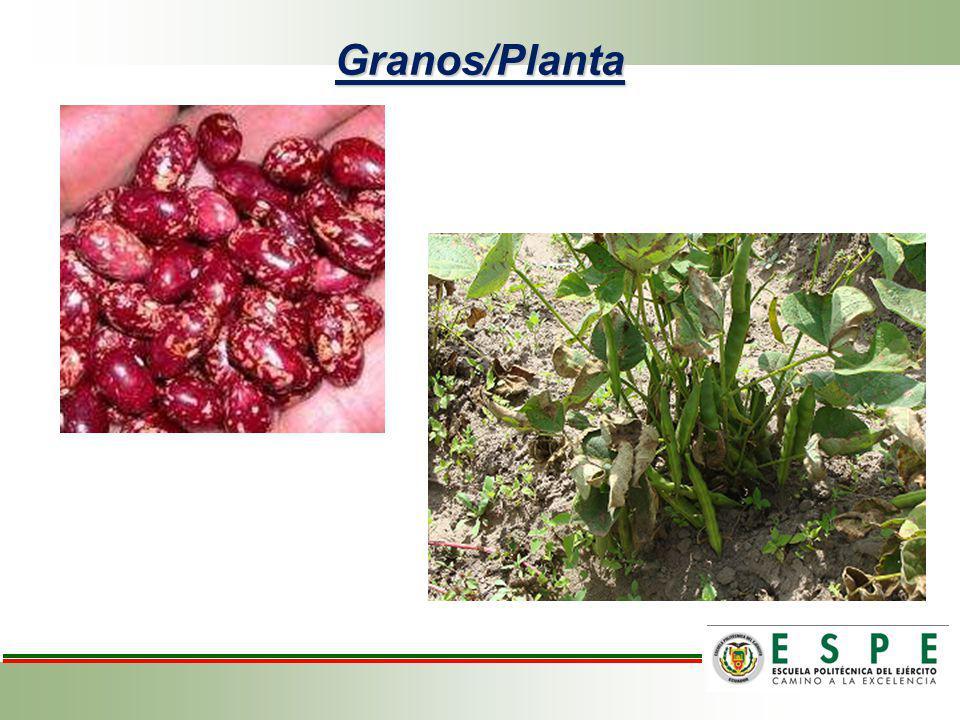 Análisis de variancia para número de granos/planta de frejol variedad cargabello.