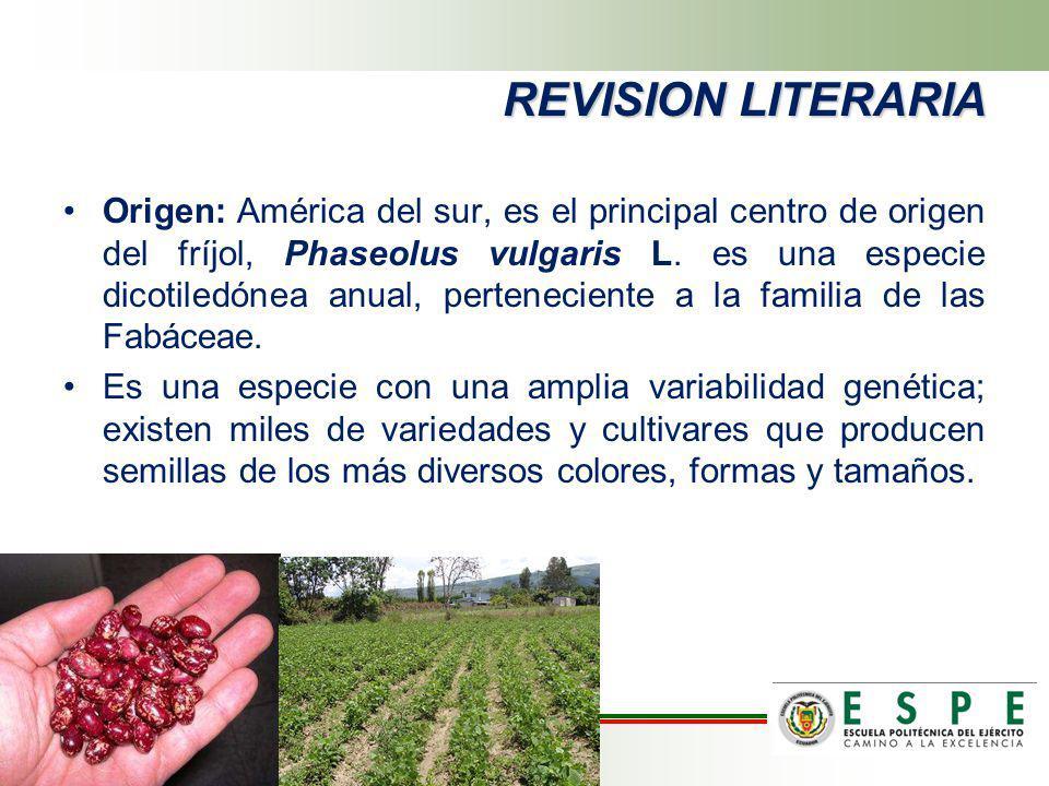 Origen: América del sur, es el principal centro de origen del fríjol, Phaseolus vulgaris L. es una especie dicotiledónea anual, perteneciente a la fam