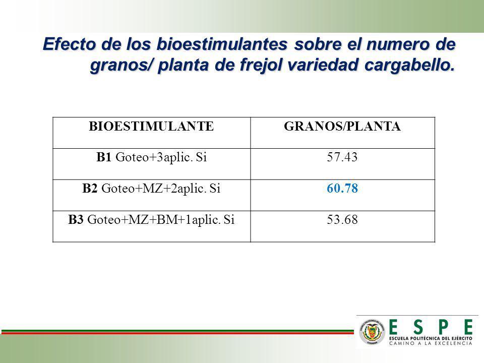 Efecto de los bioestimulantes sobre el numero de granos/ planta de frejol variedad cargabello. BIOESTIMULANTEGRANOS/PLANTA B1 Goteo+3aplic. Si57.43 B2