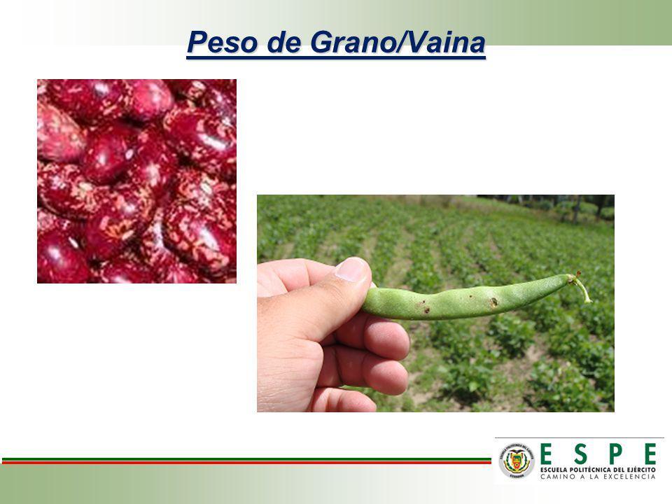 Análisis de variancia para peso de grano/vaina de frejol variedad cargabello.