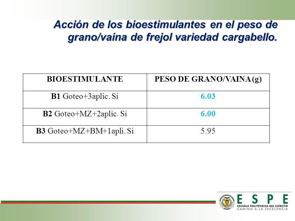 Acción de los bioestimulantes en el peso de grano/vaina de frejol variedad cargabello. BIOESTIMULANTEPESO DE GRANO/VAINA (g) B1 Goteo+3aplic. Si6.03 B