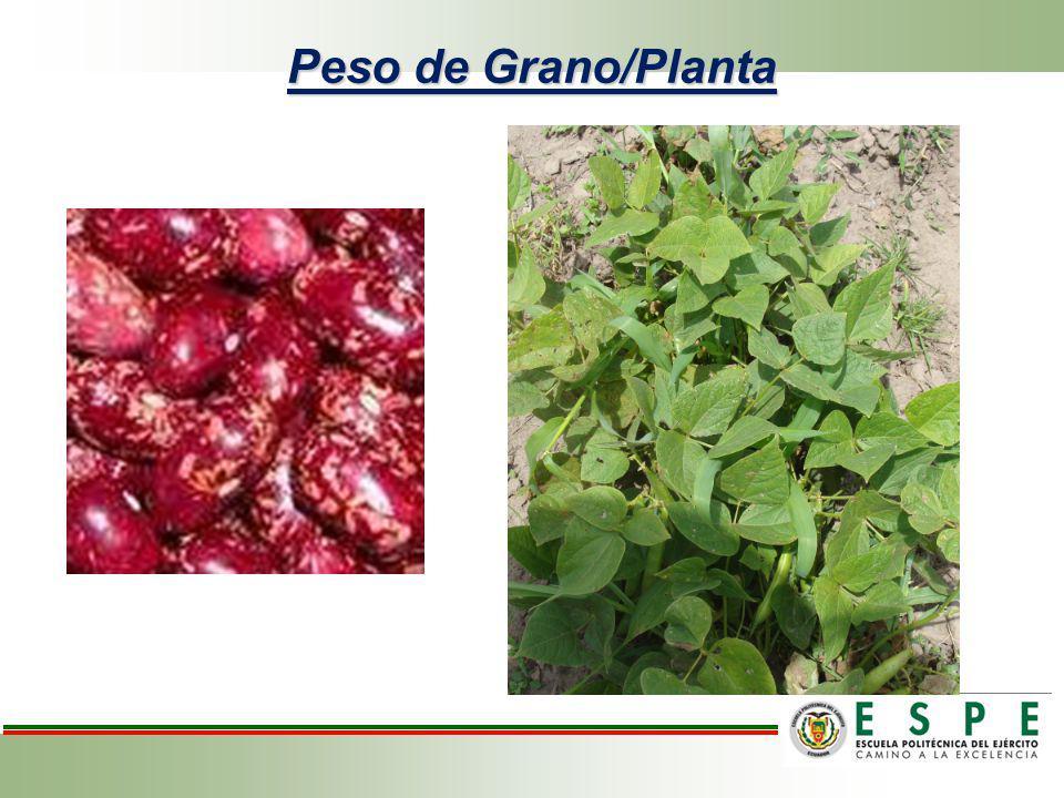 Análisis de variancia para peso de grano/planta de frejol variedad cargabello.