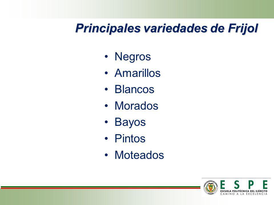 Principales variedades de Frijol Negros Amarillos Blancos Morados Bayos Pintos Moteados