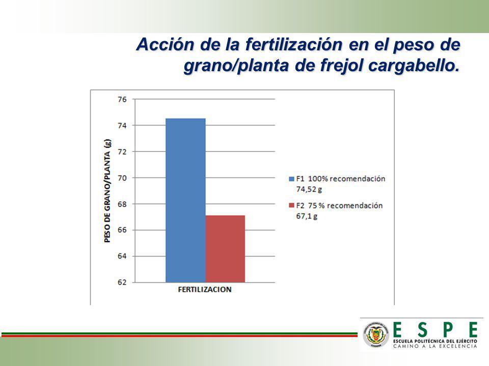 Acción de la fertilización en el peso de grano/planta de frejol cargabello.