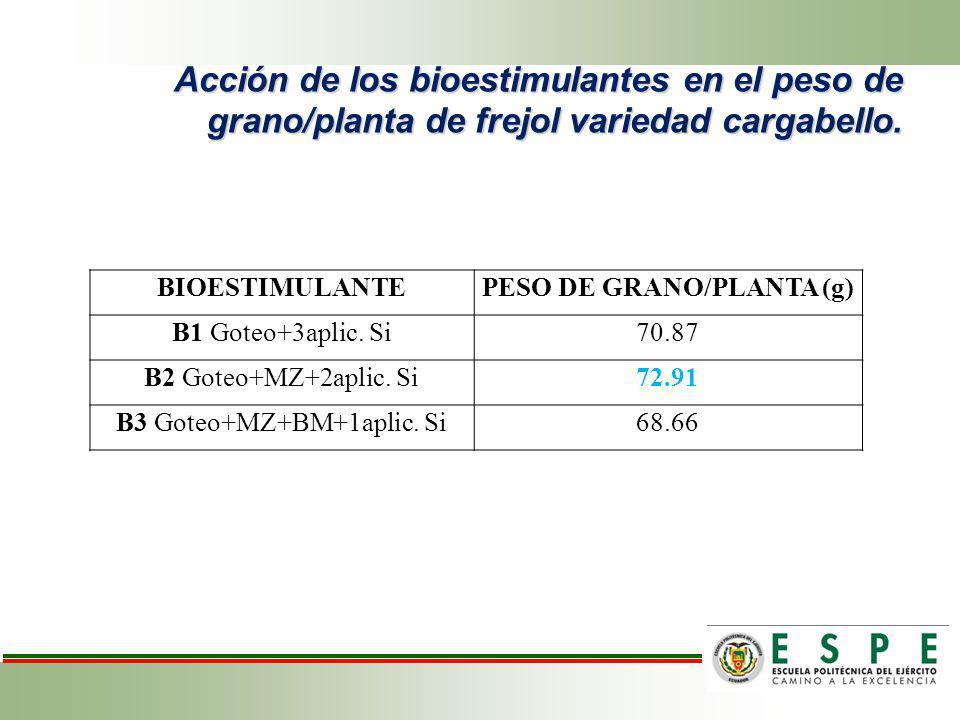 Acción de los bioestimulantes en el peso de grano/planta de frejol variedad cargabello. BIOESTIMULANTEPESO DE GRANO/PLANTA (g) B1 Goteo+3aplic. Si70.8