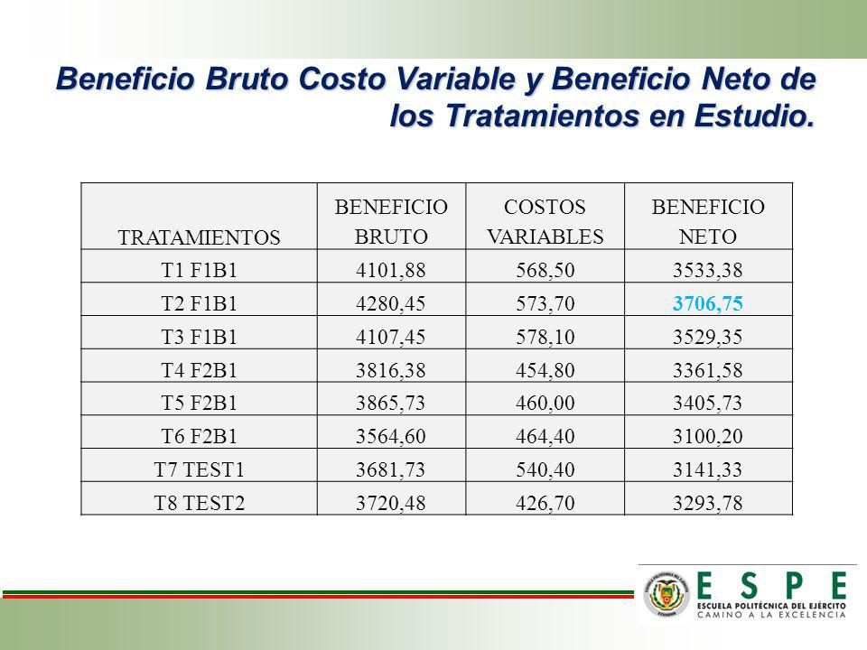 Beneficio Bruto Costo Variable y Beneficio Neto de los Tratamientos en Estudio. TRATAMIENTOS BENEFICIO BRUTO COSTOS VARIABLES BENEFICIO NETO T1 F1B141
