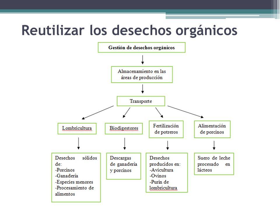 Reutilizar los desechos orgánicos