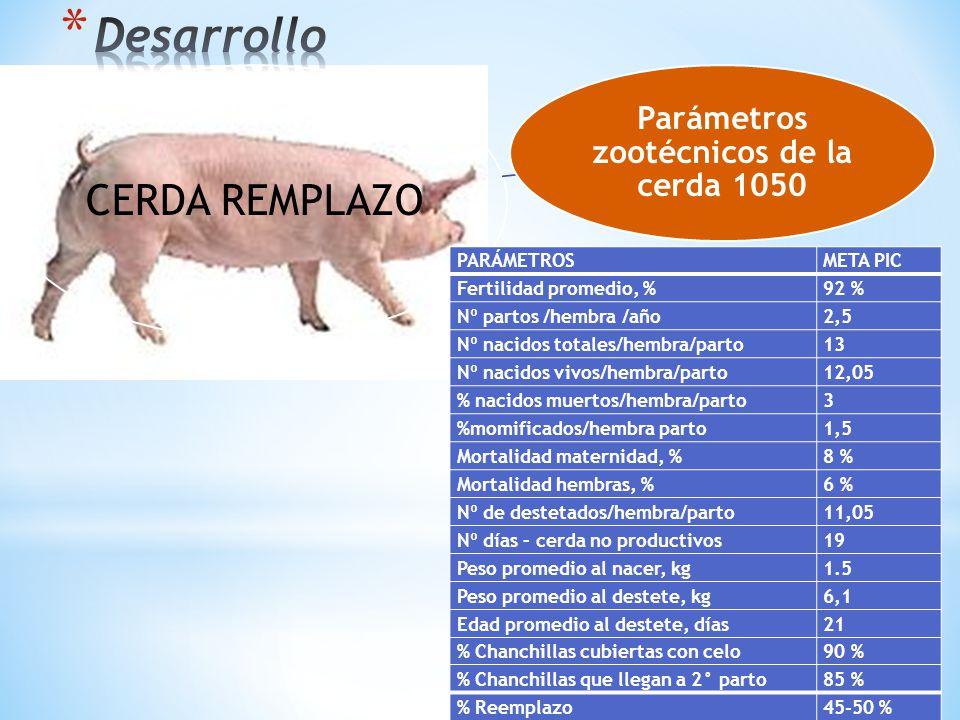 CERDA REMPLAZO Parámetros zootécnicos de la cerda 1050 PARÁMETROSMETA PIC Fertilidad promedio, %92 % Nº partos /hembra /año2,5 Nº nacidos totales/hemb