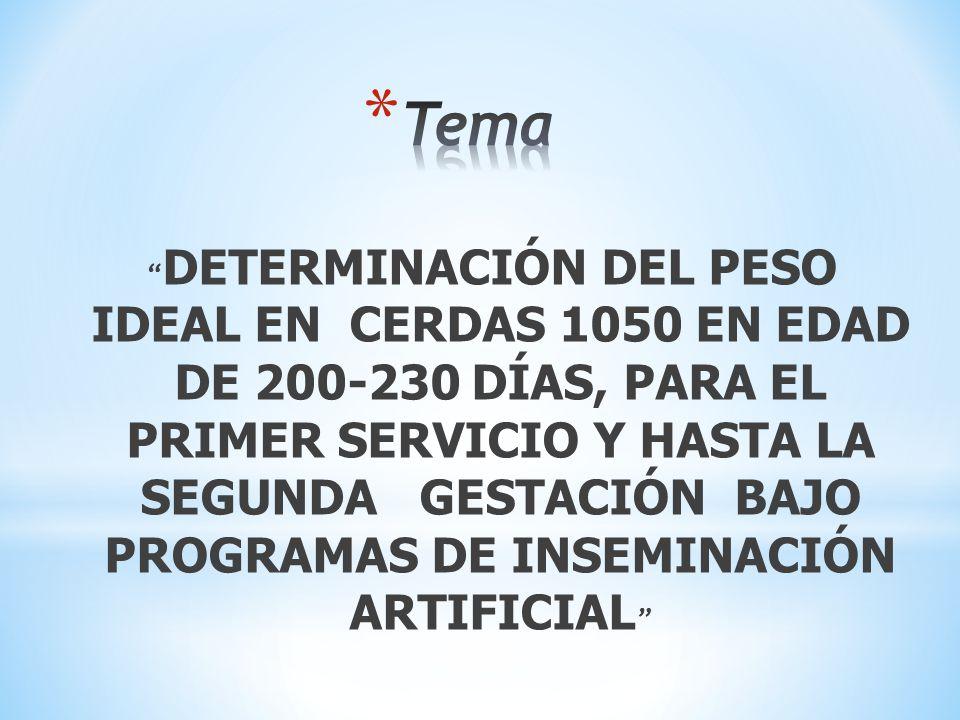 DETERMINACIÓN DEL PESO IDEAL EN CERDAS 1050 EN EDAD DE 200-230 DÍAS, PARA EL PRIMER SERVICIO Y HASTA LA SEGUNDA GESTACIÓN BAJO PROGRAMAS DE INSEMINACI
