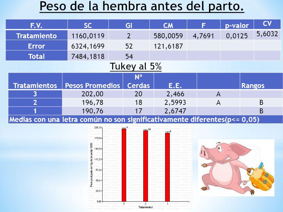 F.V.SCGlCMFp-valor CV Tratamiento1160,01192580,00594,76910,0125 5,6032 Error6324,169952121,6187 Total7484,181854 TratamientosPesos Promedios Nº Cerdas