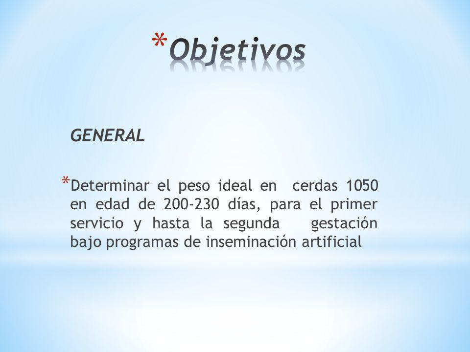 GENERAL * Determinar el peso ideal en cerdas 1050 en edad de 200-230 días, para el primer servicio y hasta la segunda gestación bajo programas de inse