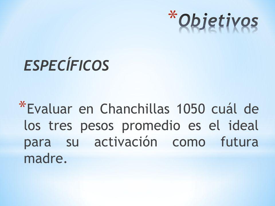 ESPECÍFICOS * Evaluar en Chanchillas 1050 cuál de los tres pesos promedio es el ideal para su activación como futura madre.