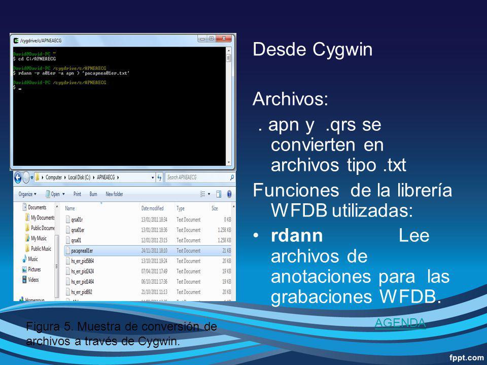 Desde Cygwin Archivos:. apn y.qrs se convierten en archivos tipo.txt Funciones de la librería WFDB utilizadas: rdannLee archivos de anotaciones para l