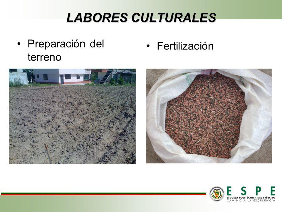 LABORES CULTURALES Preparación del terreno Fertilización