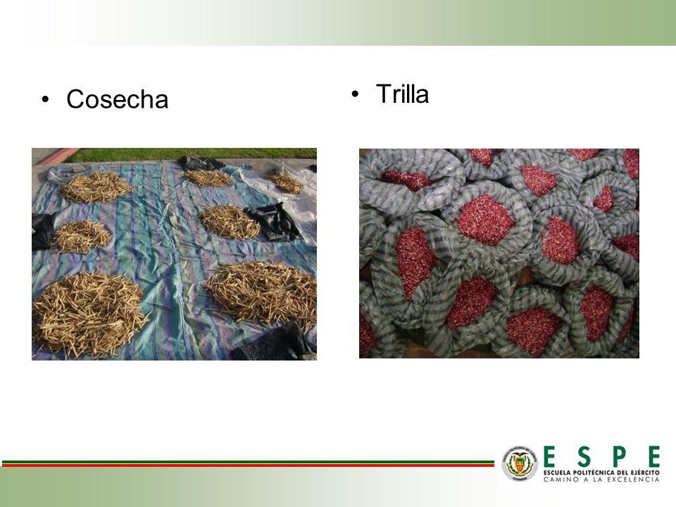 Cosecha Trilla