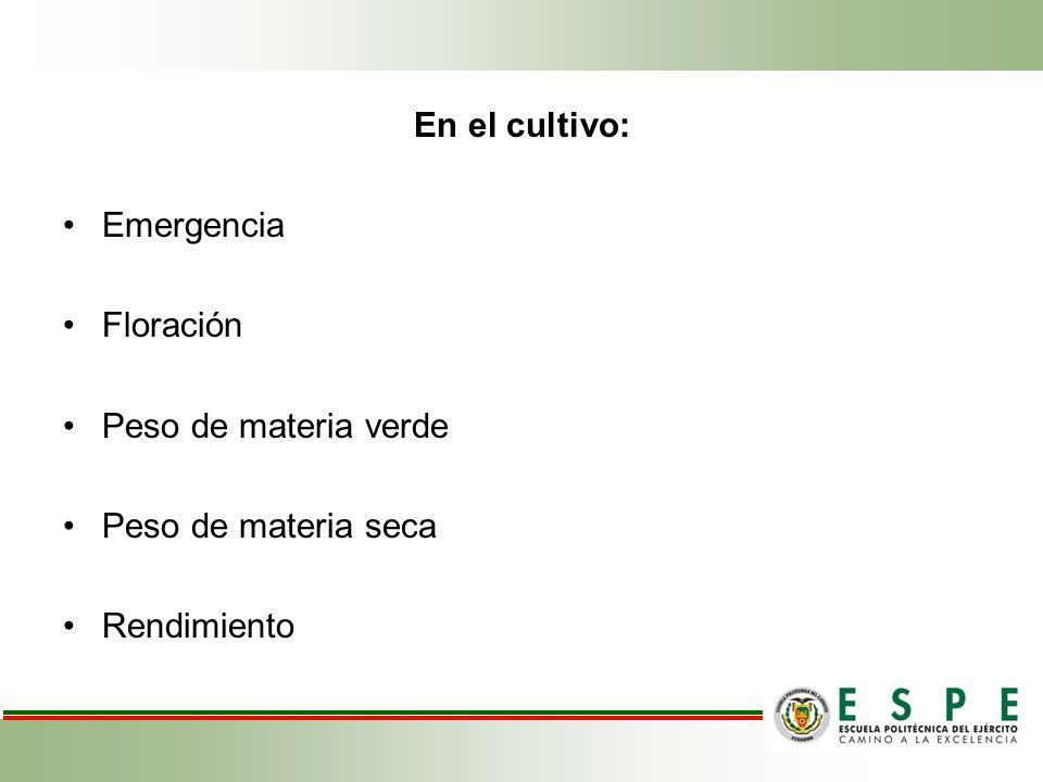 En el cultivo: Emergencia Floración Peso de materia verde Peso de materia seca Rendimiento