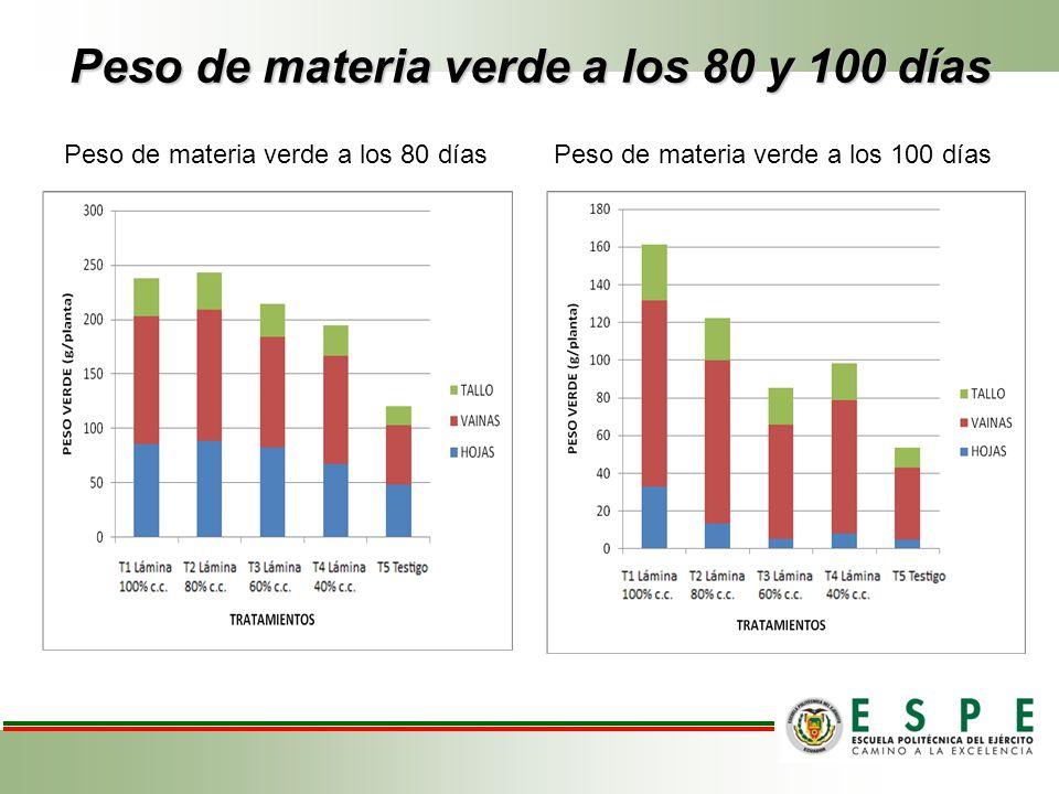 Peso de materia verde a los 80 y 100 días Peso de materia verde a los 80 días Peso de materia verde a los 100 días
