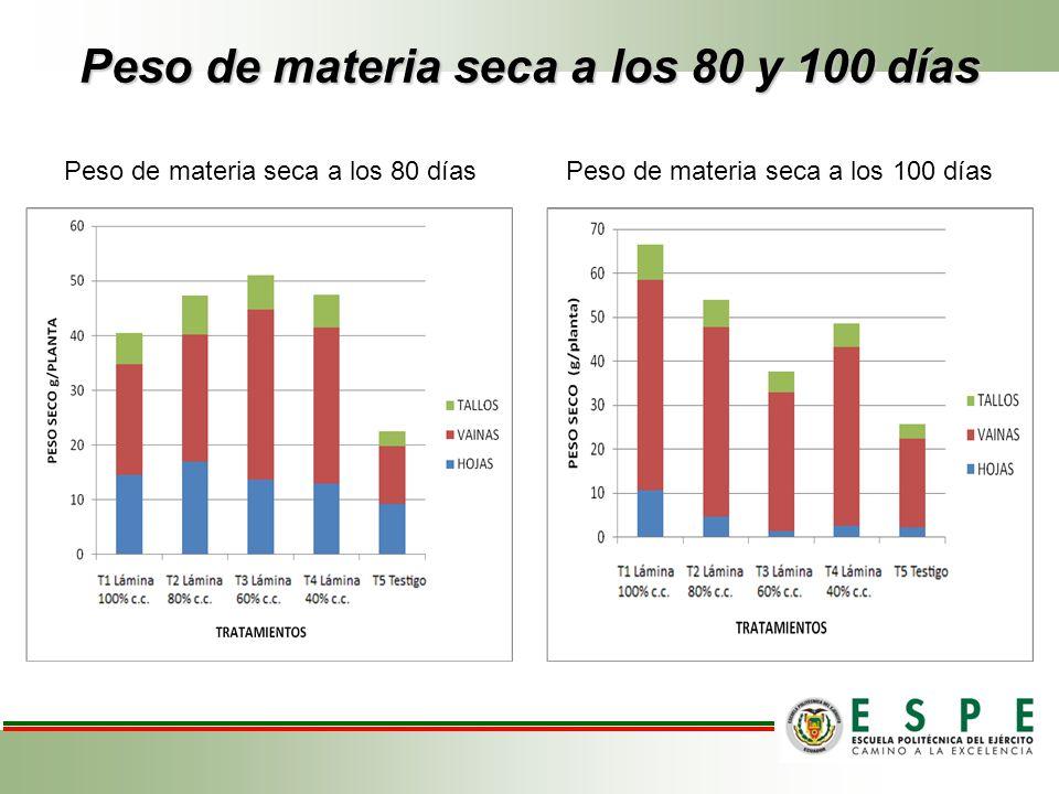 Peso de materia seca a los 80 y 100 días Peso de materia seca a los 80 días Peso de materia seca a los 100 días