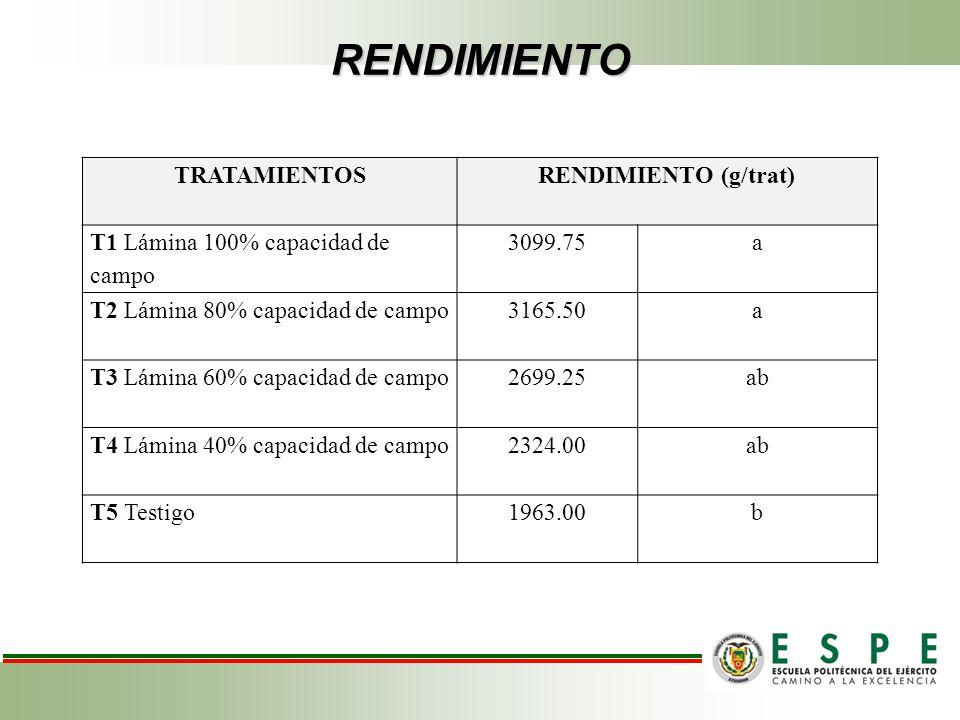 RENDIMIENTO TRATAMIENTOSRENDIMIENTO (g/trat) T1 Lámina 100% capacidad de campo 3099.75a T2 Lámina 80% capacidad de campo3165.50a T3 Lámina 60% capacid