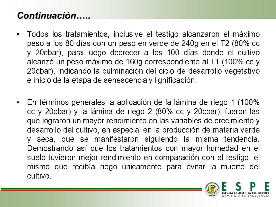 Continuación….. Todos los tratamientos, inclusive el testigo alcanzaron el máximo peso a los 80 días con un peso en verde de 240g en el T2 (80% cc y 2