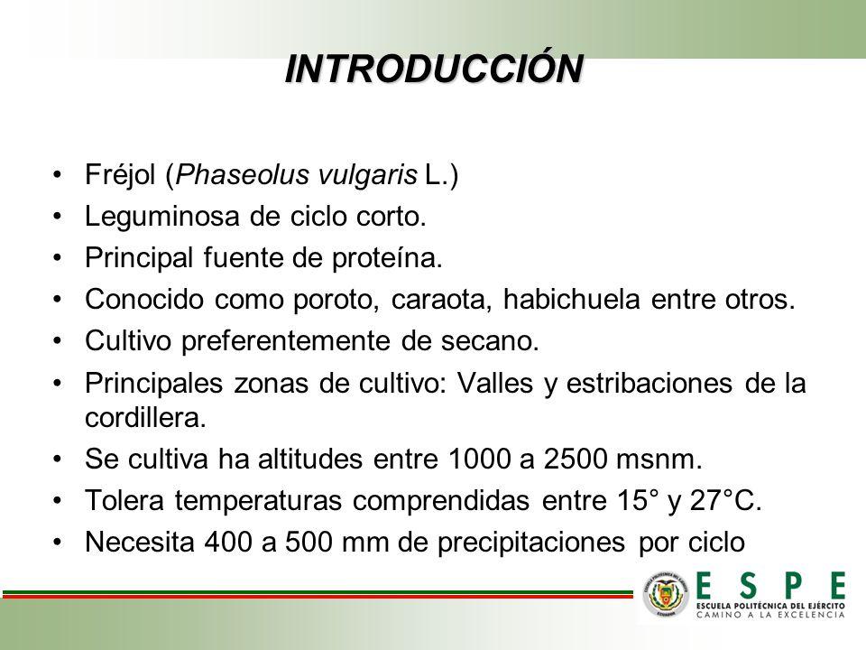INTRODUCCIÓN Fréjol (Phaseolus vulgaris L.) Leguminosa de ciclo corto. Principal fuente de proteína. Conocido como poroto, caraota, habichuela entre o